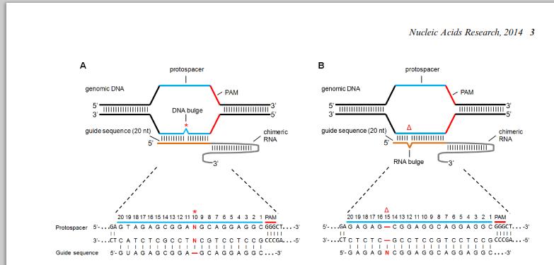 CRISPR Ins Del